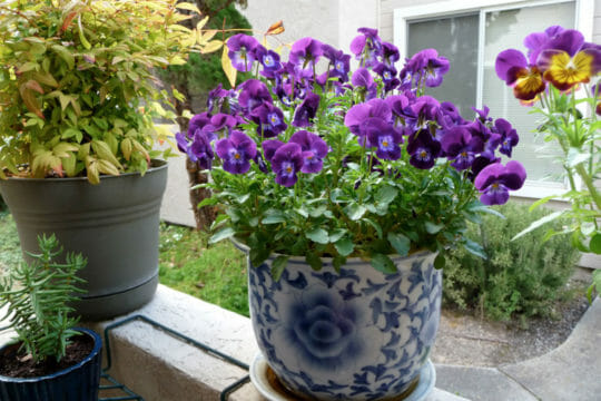 Shipping service for houseplants