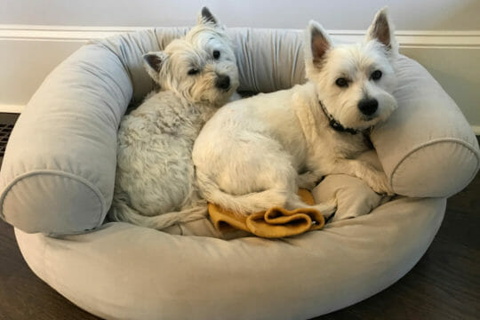 Two dogs ready to be sent with next day delivery from Roadie